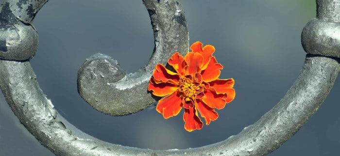 Flor Espiral Desarrollo Personal