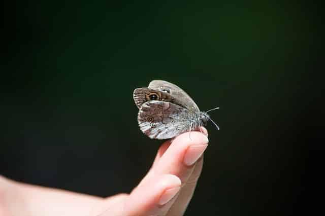 mariposa transformacion pnl